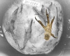 owl1.1220009806.jpg